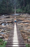 cameroon;camerouns;cameroons;cameroun;bridge;bridges;swing-bridge;rope-bridge;wire-bridge;planks-;cross;river;rivers;long;suspension-bridge;jungle-;rainforest;rain-forest;korup-national-park