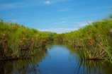 Africa;aquatic-plant;aquatic-plants;Botswana;Cyperaceae;Cyperus-papyrus;delta;deltas;Endorheic-basin;inland-delta;internal-drainage-systems;Okavango;Okavango-Delta;Okavango-Swamp;paper-reed;paper-reeds;papyrus-reed;papyrus-reeds;papyrus-sedge;plant;plants;reed;reeds;river-delta;Seven-Natural-Wonders-of-Africa;Southern-Africa;water-plant;waterplants