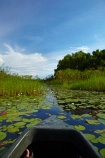 Africa;aquatic-plant;aquatic-plants;boat;boats;Botswana;canoe;canoes;delta;deltas;dugout;dugout-canoe;dugout-canoes;dugouts;Endorheic-basin;inland-delta;internal-drainage-systems;lily-pad;lily-pads;logboat;makoro;makoros;mekoro;mekoros;mokoro;mokoro-safari;mokoros;monoxylon;Nymphaeaceae;Okavango;Okavango-Delta;Okavango-Swamp;pirogue;pirogues;plant;plants;river-delta;Seven-Natural-Wonders-of-Africa;Southern-Africa;water-lilies;water-lily;water-lily-pad;water-lily-pads;water_lilies;water_lily;waterlilies;waterlily;waterlily-pad;waterlily-pads