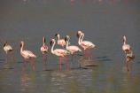 Africa;alkalii-flat;Animal;animals;avian;barren;barreness;basin;bird;Bird-Sanctuary;bird-spotting;bird-watching;bird_watching;birds;Botswana;clay-pan;clay-pans;depression;desert;deserts;desolate;dry;dry-lake;dry-lake-bed;dry-lake-beds;dry-lakes;eco-tourism;eco_tourism;ecotourism;empty;endorheric;endorheric-basin;endorheric-basins;endorheric-lake;extreme;Fauna;Flamingo;Flamingoes;flat;geographic;geography;glare;glary;lake;lake-bed;lake-beds;lakes;Lesser-Flamingo;Lesser-Flamingoes;Namibia;Nata;Nata-Bird-Sanctuary;Natural;Nature;Ornithology;pan;pans;Phoeniconaias-minor;playa;playas;sabkha;safari;safaris;saline;salt;salt-crust;salt-flat;salt-flats;salt-lake;salt-lakes;salt-pan;salt-pans;salt_pan;salt_pans;saltpan;saltpans;salty;Southern-Africa;Sowa-Pan;Sua-Pan;vast;vlei;white;white-surface;wild;wildlife