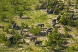 aerial;aerial-image;aerial-images;aerial-photo;aerial-photograph;aerial-photographs;aerial-photography;aerial-photos;aerial-view;aerial-views;aerials;Africa;African-bush-elephant;African-bush-elephants;African-elephant;African-elephants;animal;animals;Botswana;delta;deltas;elephant;elephant-herd;elephants;Endorheic-basin;herd;herd-of-elephant;herds;inland-delta;internal-drainage-systems;Loxodonta-africana;mammal;mammals;Okavango;Okavango-Delta;Okavango-Swamp;pachyderm;pachyderms;river-delta;Seven-Natural-Wonders-of-Africa;Southern-Africa;wildlife