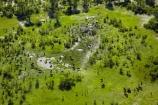 aerial;aerial-image;aerial-images;aerial-photo;aerial-photograph;aerial-photographs;aerial-photography;aerial-photos;aerial-view;aerial-views;aerials;Africa;African-buffalo;African-buffaloes;animal;animals;Botswana;buffalo;buffalo-herd;buffalo-herds;buffaloes;cape-buffalo;cape-buffaloes;delta;deltas;Endorheic-basin;flood-plain;flood-plains;flood_plain;flood_plains;floodplain;floodplains;herd;herds;inland-delta;internal-drainage-systems;mammal;mammals;Okavango;Okavango-Delta;Okavango-Swamp;plain;plains;river-delta;Seven-Natural-Wonders-of-Africa;Southern-Africa;Syncerus-caffer;Syncerus-caffer-caffer;wildlife