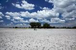 Adansonia;Adansonia-digitata;Africa;alkalii-flat;Baines-Baobabs;Baines-Baobabs;Baines-Baobabs;baobab;baobab-tree;baobab-trees;baobabs;barren;barreness;basin;Botswana;clay-pan;clay-pans;cloud;clouds;depression;desert;deserts;desolate;dry;dry-lake;dry-lake-bed;dry-lake-beds;dry-lakes;empty;endorheric;endorheric-basin;endorheric-basins;endorheric-lake;extreme;flat;geographic;geography;glare;glary;Kudiakam-Pan;lake;lake-bed;lake-beds;lakes;Makgadikgadi-Pan;Makgadikgadi-Pans;national-park;national-parks;Nxai-Pan-N.P.;Nxai-Pan-National-Park;Nxai-Pan-NP;pan;pans;people;person;playa;playas;remote;remoteness;rock-salt;sabkha;saline;salt;salt-crust;salt-lake;salt-lakes;salt-pan;salt-pans;salt-rock;salt-rocks;salt_pan;salt_pans;saltpan;saltpans;salty;skies;sky;Southern-Africa;tourism;tourist;tourists;tree;trees;vast;vlei;white;white-surface;wilderness