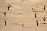 900-year-old-trees;adventure;adventurous;Africa;clay-pan;clay-pans;dead-tree;dead-trees;Dead-Vlei;Deadvlei;desert;deserts;dry-lake;dry-lake-bed;dry-lake-beds;dry-lakes;lake-bed;mammal;Namib-Desert;Namib-Naukluft-N.P.;Namib-Naukluft-National-Park;Namib-Naukluft-NP;Namib_Naukluft-N.P.;Namib_Naukluft-National-Park;Namib_Naukluft-NP;Namibia;national-park;national-parks;pan;people;person;photographer;photographers;reserve;reserves;salt-pan;salt-pans;Sossusvlei;Southern-Africa;tourism;tourist;tourists;tree-trunk;tree-trunks;vlei;white-clay-pan;white-pan