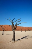 900-year-old-trees;Africa;arid;big-dunes;clay-pan;clay-pans;dead-tree;dead-trees;Dead-Vlei;Deadvlei;desert;deserts;dry;dry-lake;dry-lake-bed;dry-lake-beds;dry-lakes;dune;dunes;giant-dune;giant-dunes;giant-sand-dune;giant-sand-dunes;hot;huge-dunes;lake-bed;large-dunes;Namib-Desert;Namib-Naukluft-N.P.;Namib-Naukluft-National-Park;Namib-Naukluft-NP;Namib_Naukluft-N.P.;Namib_Naukluft-National-Park;Namib_Naukluft-NP;Namibia;national-park;national-parks;natural;orange-sand;pan;remote;remoteness;reserve;reserves;salt-pan;salt-pans;sand;sand-dune;sand-dunes;sand-hill;sand-hills;sand_dune;sand_dunes;sand_hill;sand_hills;sanddune;sanddunes;sandhill;sandhills;sandy;Sossusvlei;Southern-Africa;tree-trunk;tree-trunks;vlei;white-clay-pan;wilderness