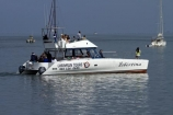 Africa;Atlantic-Coast;Atlantic-Ocean;boat;boat-cruise;boat-cruises;boats;catamaran;catamarans;coast;coastal;cruiser;cruisers;harbour;harbours;Laramon-Tour-Boat;launch;launches;Mola-Mola;Mola-Mola-Boat-Tours;Mola-Mola-Safaris;Mola-Mola-Tours;Namibia;Skeleton-Coast;Southern-Africa;tour-boat;tour-boats;tourist-boat;tourist-boats;Walfischbai;Walfischbucht;Walvis-Bay;Walvis-Bay-Harbour;Walvisbaai