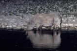 Africa;animal;animals;black-rhinoceros;calm;Diceros-bicornis;drink;drinking;dusk;Etosha-N.P.;Etosha-National-Park;Etosha-NP;evening;floodlighting;floodlit;game-park;game-parks;game-reserve;game-reserves;hook-lipped-rhinoceros;hook_lipped-rhinoceros;mammal;mammals;Namibia;national-park;national-parks;night;night_time;nightfall;Okaukuejo;Okaukuejo-waterhole;placid;quiet;reflected;reflection;reflections;rhino;rhinoceros;rhinoceroses;rhinocerotes;rhinos;serene;smooth;Southern-Africa;still;tranquil;twilight;water;waterhole;waterholes;wildlife;wildlife-park;wildlife-parks;wildlife-reserve;wildlife-reserves