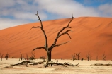900-year-old-trees;Africa;African;arid;big-dunes;clay-pan;clay-pans;dead-tree;dead-trees;Dead-Vlei;Deadvlei;desert;deserts;dry;dry-lake;dry-lake-bed;dry-lake-beds;dry-lakes;dune;dunes;giant-dune;giant-dunes;giant-sand-dune;giant-sand-dunes;hot;huge-dunes;lake-bed;large-dunes;Namib-Desert;Namib-Naukluft-N.P.;Namib-Naukluft-National-Park;Namib-Naukluft-NP;Namib_Naukluft-N.P.;Namib_Naukluft-National-Park;Namib_Naukluft-NP;Namibia;national-park;national-parks;natural;orange-sand;pan;remote;remoteness;reserve;reserves;salt-pan;salt-pans;sand;sand-dune;sand-dunes;sand-hill;sand-hills;sand_dune;sand_dunes;sand_hill;sand_hills;sanddune;sanddunes;sandhill;sandhills;sandy;Sossusvlei;Southern-Africa;tree-trunk;tree-trunks;vlei;white-clay-pan;wilderness