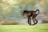 Africa;African;African-animals;African-wildlife;animal;animals;Augrabies-Falls;Augrabies-Falls-N.P.;Augrabies-Falls-National-Park;Augrabies-Falls-NP;baboon;baboons;blur;blurred;blurring;Cape-baboon;Cape-baboons;Chacma-baboon;Chacma-baboons;game-drive;game-park;game-parks;game-reserve;game-reserves;game-viewing;Gray_footed-chacma-baboon;mammal;mammals;monkey;monkeys;national-park;national-parks;natural;nature;Northern-Cape;Northern-Cape-Province;Papio-ursinus;Papio-ursinus-griseipes;primate;primates;Republic-of-South-Africa;reserve;reserves;safari;safaris;slow-motion;South-Africa;South-African-Republic;Southern-Africa;wild;wilderness;wildlife;wildlife-park;wildlife-parks;wildlife-reserve;wildlife-reserves