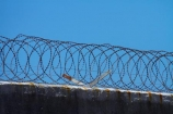 Africa;barbed-wire;barbed-wire-fence;barbed_wire;blue-sky;Cape-Town;fence;fences;gaol;gaols;island;islands;jail;jails;prison;prison-fence;prison-fences;prison-island;prisons;razor-wire;razor-wires;Robben-Island;Robben-Island-Gaol;Robben-Island-Jail;Robben-Island-Prison;Robbeneiland;S.A.;security;security-fences;South-Africa;Southern-Africa;Sth-Africa;Table-Bay;Western-Cape;Western-Cape-Province;wire;wires