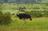 Africa;African;African-animals;African-wildlife;Animal;animals;avian;bird;bird-spotting;bird-watching;bird_watching;birds;eco-tourism;eco_tourism;ecotourism;Fauna;game-park;game-parks;game-reserve;game-reserves;Great-Limpopo-Transfrontier-Park;Kruger;Kruger-N.P.;Kruger-National-Park;Kruger-NP;Kruger-reserve;Kruger-to-Canyons-Biosphere;national-park;national-parks;Natural;Nature;Ornithology;Republic-of-South-Africa;South-Africa;South-African-Republic;Southern-Africa;wild;wildlife;wildlife-park;wildlife-parks;wildlife-reserve;wildlife-reserves