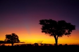 acacia;acacia-tree;acacia-trees;acacias;Africa;African-sunset;African-sunsets;dusk;evening;game-park;game-parks;game-reserve;game-reserves;Hwange-N.P.;Hwange-National-Park;Hwange-NP;national-park;national-parks;Ngweshla-Camp;Ngweshla-Picnic-Area;Ngweshla-Picnic-Site;night;night_time;nightfall;orange;Southern-Africa;sunset;sunsets;tree;trees;twilight;Wankie-Game-Reserve;wildlife-park;wildlife-parks;wildlife-reserve;wildlife-reserves;Zimbabwe
