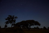 acacia;acacia-tree;acacia-trees;acacias;Africa;astronomy;celestial-bodies;constellation;constellations;dark;dusk;evening;game-park;game-parks;game-reserve;game-reserves;heavens;Hwange-N.P.;Hwange-National-Park;Hwange-NP;interstellar-cloud;milky-way;Milky-Way-Galaxy;national-park;national-parks;Ngweshla-Camp;Ngweshla-Picnic-Area;Ngweshla-Picnic-Site;night;night-sky;night-time;night_sky;night_time;nightfall;nightsky;Southern-Africa;star;star-gazing;starry;starry-night;stars;the-Galaxy;tree;trees;twilight;Wankie-Game-Reserve;wildlife-park;wildlife-parks;wildlife-reserve;wildlife-reserves;Zimbabwe
