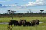 Africa;African-bush-elephant;African-bush-elephants;African-elephant;African-elephants;animal;animals;elephant;elephant-herd;elephant-herds;elephants;game-park;game-parks;game-reserve;game-reserves;herd;herds;Hwange-N.P.;Hwange-National-Park;Hwange-NP;Loxodonta-africana;mammal;mammals;national-park;national-parks;pachyderm;pachyderms;Southern-Africa;Wankie-Game-Reserve;wildlife;wildlife-park;wildlife-parks;wildlife-reserve;wildlife-reserves;Zimbabwe