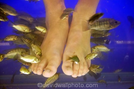 Asia;bare-feet;barefoot;Cambodia;dead-skin;doctor-fish;feet;fish;fish-massage;fish-massages;fish-pedicure;fish-pedicures;fish-tank;fishes;foot;foot-massage;foot-massages;Garra-rufa;Indochina-Peninsula;Kampuchea;kangal-fish;Kingdom-of-Cambodia;nibble-fish;people;person;Siem-Reap;Siem-Reap-Province;Southeast-Asia;tourism;tourist;tourists