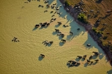aerial;aerial-image;aerial-images;aerial-photo;aerial-photograph;aerial-photographs;aerial-photography;aerial-photos;aerial-view;aerial-views;aerials;agricultural;agriculture;animals;Asia;Asian-water-buffalo;buffalo;buffalos;Cambodia;country;countryside;dam;dams;dirty-water;domestic-Asian-water-buffalo-Bubalus-bubalis;domestic-water-buffalo;farm;farming;farmland;farms;field;fields;Herbivore;Herbivores;Herbivorous;Indochina-Peninsula;Kampuchea;Kingdom-of-Cambodia;Livestock;mammal;mammals;meadow;meadows;muddy-water;paddock;paddocks;pasture;pastures;rural;Siem-Reap;Siem-Reap-Province;Southeast-Asia;stock;water;Water-buffalo;Water-buffalos
