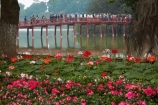 Asia;Asian;bridge;bridges;Cu-Thê-Húc;Cau-The-Huc;flower-bed;flower-garden;flower-gardens;flowers;foot-bridge;foot-bridges;footbridge;footbridges;H-Guom;H-Hoàn-Kim;Hanoi;heritage;historic;historic-place;historic-places;historical;historical-place;historical-places;history;Hoan-Kiem-Lake;Jade-Island;lake;Lake-of-the-Restored-Sword;Lake-of-the-Returned-Sword;lakes;Ngoc-Son-Temple;old;pedestrian-bridge;pedestrian-bridges;people;person;pink-flowers;Red-Bridge;South-East-Asia;Southeast-Asia;Sword-Lake;Temple-of-the-Jade-Mountain;The-Huc-Bridge;tourism;tourist;tourists;tradition;traditional;Vietnam;Vietnamese;water;wooden-bridge;wooden-bridges