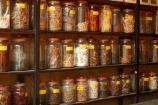 alternative-medicine;alternative-medicines;bottle;bottles;Hu;Hue;jar;jars;North-Central-Coast;shelf;shelves;southern-Herbology;Tha-Thiên_Hu-Province;Thuc-Nam;Thua-Thien_Hue-Province;traditional-medicine;traditional-medicine-shop;traditional-medicine-shops;traditional-medicines;Vietnam;Vietnamese;Y-hc-C-truyn;Asia