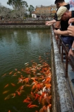 Asian;fish-pond;fishes;heritage;historic;historic-place;historic-places;historical;historical-place;historical-places;history;Hu;Hue;Hue-Citadel;Hue-Imperial-Citadel;Imperial-Citadel-of-Hue;Imperial-City;Imperial-Enclosure;Kinh-Thanh;koi-fish;koi-fish-pond;koi-pond;North-Central-Coast;old;orange-fish;Ornamental-koi-fish;people;person;pond;ponds;Tha-Thiên_Hu-Province;The-Citadel;Thua-Thien_Hue-Province;tourist;tourists;tradition;traditional;UN-world-heritage-area;UN-world-heritage-site;UNESCO-World-Heritage-area;UNESCO-World-Heritage-Site;united-nations-world-heritage-area;united-nations-world-heritage-site;Vietnam;Vietnamese;world-heritage;world-heritage-area;world-heritage-areas;World-Heritage-Park;World-Heritage-site;World-Heritage-Sites;Asia