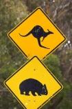 australasia;australia;australian;Blue-Mountains;Blue-Mountains-N.P.;Blue-Mountains-National-Park;Blue-Mountains-NP;kangaroo;Kangaroo-and-Wombat-Warning-Sign;Kangaroo-and-Wombat-Warning-Signs;kangaroo-sign;kangaroo-signs;Kangaroo-Warning-Sign;kangaroos;Lasiorhinus-latrifrons;N.S.W.;natural;nature;New-South-Wales;next-8-km;next-eight-kilometres;NSW;Road;road-sign;road-signs;road_sign;road_signs;roads;roadsign;roadsigns;sign;signs;symbol;symbols;tranportation;transport;travel;UN-world-heritage-site;UNESCO-World-Heritage-Site;united-nations-world-heritage-site;warn;warning;wildlife;wombat;wombat-sign;wombat-signs;wombat-warning-sign;wombat-warning-signs;wombats;world-heritage;world-heritage-area;world-heritage-areas;World-Heritage-Park;World-Heritage-site;World-Heritage-Sites;yellow-black