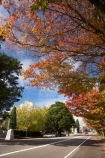 Australia;autuminal;autumn;Autumn-Colour;autumn-colours;autumnal;Blackheath;Blue-Mountains;color;colors;colour;colours;deciduous;fall;Great-Western-Highway;Highway-32;leaf;leaves;N.S.W.;New-South-Wales;NSW;oak;oak-tree;oak-trees;oaks;Route-32;season;seasonal;seasons;tree;trees