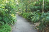 Australia;botanical;Brisbane;City-Botanic-Gardens;footpath;footpaths;forest;forests;path;pathways;Queensland;rain-forest;rain-forests;Rainforest-Pathway;walk;walkway;walkways