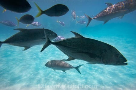 australasian;Australia;australian;Barrier-Reef;cairns;cay;cays;coast;coastal;coastline;coastlines;coasts;coral-cay;coral-cays;coral-reef;coral-reefs;Coral-Sea;dive-site;dive-sites;Ecosystem;Environment;fish;fishes;Glass-Bottomed-Boat;Glass-Bottomed-Boats;Glass_Bottomed-Boat;Glass_Bottomed-Boats;Great-Barrier-Reef;Great-Barrier-Reef-Marine-Park;Green-Is;Green-Is-NP;Green-Is.;green-island;Green-Island-N.P.;Green-Island-National-Park;Green-Island-NP;Green-Island-Resort;holiday;holiday-destination;holiday-destinations;Holidays;marine-environment;North-Queensland;ocean;oceans;Qld;queensland;reef;reefs;sand-cay;sand-cays;sea;seas;Semi-Sub;Semi-Submarine;Semi-Submarines;Semi-Subs;Semi_Sub;Semi_Submarine;Semi_Submarines;Semi_Subs;SemiSub;SemiSubmarine;SemiSubmarines;SemiSubs;shore;shoreline;shorelines;Shores;south-pacific;tasman-sea;tourism;travel;trevally;Tropcial-North-Queensland;tropical;tropical-reef;tropical-reefs;underwater;underwater-photo;underwater-photography;underwater-photos;UNESCO-World-Heritage-Site;Vacation;Vacations;water;Wiorld-Heritage-Site;world-heritage-area;World-Heritage-Park;world-heritage-site