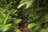 Australasian;Australia;Australian;beautiful;beauty;brook;brooks;bush;creek;creeks;Daintree-N.P.;Daintree-National-Park;Daintree-NP;endemic;flora;flow;forest;forestry;forests;green;lush;Mossman-Gorge;Mossman-Gully;native;native-bush;natural;nature;North-Queensland;outdoor;outdoors;palm;palm-tree;palm-trees;palms;Qld;Queensland;rain-forest;rain-forests;rain_forest;rain_forests;rainforest;rainforests;scene;scenic;stream;streams;tree;trees;Tropcial-North-Queensland;tropical-rainforest;tropical-rainforests;tropical-vegetation;water;watercourse;wet;wood;woods