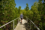 Australasian;Australia;Australian;boardwalk;boardwalks;Darwin;East-Point-Recreation-Reserve;East-Point-Reserve;male;man;mangrove;Mangrove-Boardwalk;mangroves;N.T.;Northern-Territory;NT;people;person;Top-End