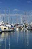 australasia;Australia;australian;boat;boat-harbour;boats;calm;catamaran;catamarans;coast;coastal;fishing-boat;fishing-boats;Fraser-Coast;harbor;harbors;harbours;Hervey-Bay;jetties;jetty;marina;marinas;mast;masts;pier;piers;queensland;reflect;reflection;reflections;Urangan;wharfs;wharves;yacht;yachts