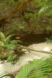 australasia;Australia;australian;brook;brooks;bush;central-station;clean;clear;clear-water;creek;creeks;fern;ferns;forest;forests;Fraser-Island;great-sandy-n.p.;great-sandy-national-park;great-sandy-np;islands;native-bush;natural;palm;palms;pristine;queensland;rainforest;sand;sandy;stream;streams;tree;trees;UN-world-heritage-site;united-nations-world-heritage-s;vegetation;wanggoolba;wangoolba;water;white-sand;white-sands;world-heritage;World-Heritage-site