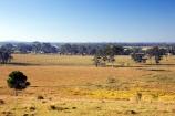agricultural;agriculture;australasia;Australia;australian;eucalyptus;farm;farming;farmland;farms;field;fields;gum-tree;gum-trees;hervey-bay;meadow;meadows;open;paddock;paddocks;pasture;pastures;Queensland;rural;tree;trees
