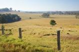 agricultural;agriculture;australasia;Australia;australian;eucalyptus;farm;farming;farmland;farms;fence;fenceline;fencelines;fences;field;fields;gum-tree;gum-trees;hervey-bay;meadow;meadows;open;paddock;paddocks;pasture;pastures;Queensland;rural;tree;trees