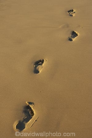 australasia;Australia;bare-feet;bare-foot;beach;beaches;coast;coastal;direction;early-light;foot-print;foot-prints;foot-step;foot-steps;footprint;footprints;footstep;footsteps;freedom;Gold-Coast;holiday;holidays;queensland;sand;sandy;surfers-paradise;tourism;travel;vacation;vacations