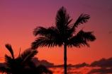 Aus;Australia;Australian;dusk;evening;night;night_time;nightfall;orange;palm;palm-tree;palm-trees;palms;QLD;Queensland;sunset;sunsets;twilight