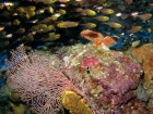 Agincourt-Reef;Agincourt-Reefs;Apogon-hoevenii;Australasian;Australia;Australian;Barrier-Reef;cardinalfish;cardinalfishes;cave;coral-reef;coral-reefs;Coral-Sea;corals;dive-site;dive-sites;diving;ecosystem;environment;fan-coral;fan-corals;fish;fishes;Frostfin-cardinalfish;Frostfin-cardinalfishes;gorgonian-fan-coral;Great-Barrier-Reef;Great-Barrier-Reef-Marine-Park;marine;marine-environment;marine-life;marinelife;North-Queensland;Ocean;oceanlife;Oceans;Qld;Queensland;reef;reefs;ribbon-reef;ribbon-reefs;ribbonreef;ribbonreefs;school;schools;scuba-diving;Sea;sea-fan;sea-fans;seafan;seafans;sealife;Seas;shoal;shoals;South-Pacific;Tasman-Sea;Tropcial-North-Queensland;tropical-reef;tropical-reefs;under-water;under_water;undersea;underwater;underwater-photo;underwater-photography;underwater-photos;UNESCO-World-Heritage-Site;Wiorld-Heritage-Site;World-Heritage-Area;World-Heritage-Park