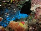 Aethaloperca-rogaa;Agincourt-Reef;Agincourt-Reefs;Australasian;Australia;Australian;Barrier-Reef;coral-reef;coral-reefs;Coral-Sea;corals;dive-site;dive-sites;diving;ecosystem;environment;fan-coral;fan-corals;fish;fishes;gorgonian-fan-coral;Great-Barrier-Reef;Great-Barrier-Reef-Marine-Park;Leaf-Scorpionfish;Leaf-Scorpionfishes;marine;marine-environment;marine-life;marinelife;North-Queensland;Ocean;oceanlife;Oceans;Paperfish;Qld;Queensland;Red_flushed-Rockcod;reef;reefs;ribbon-reef;ribbon-reefs;ribbonreef;ribbonreefs;Sailfin-leaf-fish;school;schools;Scorpaenidae;Scorpionfish;scorpionfishes;scuba-diving;Sea;sea-fan;sea-fans;seafan;seafans;sealife;Seas;shoal;shoals;South-Pacific;Taenianotus-triacanthus;Tasman-Sea;Tropcial-North-Queensland;tropical-reef;tropical-reefs;under-water;under_water;undersea;underwater;underwater-photo;underwater-photography;underwater-photos;UNESCO-World-Heritage-Site;Wiorld-Heritage-Site;World-Heritage-Area;World-Heritage-Park