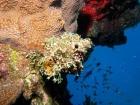 Agincourt-Reef;Agincourt-Reefs;Australasian;Australia;Australian;Barrier-Reef;coral-reef;coral-reefs;Coral-Sea;dive-site;dive-sites;diving;ecosystem;environment;fish;fishes;Great-Barrier-Reef;Great-Barrier-Reef-Marine-Park;marine;marine-environment;marine-life;marinelife;North-Queensland;Ocean;oceanlife;Oceans;Qld;Queensland;reef;reefs;ribbon-reef;ribbon-reefs;ribbonreef;ribbonreefs;scuba-diving;Sea;sealife;Seas;South-Pacific;Tasman-Sea;Tropcial-North-Queensland;tropical-reef;tropical-reefs;under-water;under_water;undersea;underwater;underwater-photo;underwater-photography;underwater-photos;UNESCO-World-Heritage-Site;Wiorld-Heritage-Site;World-Heritage-Area;World-Heritage-Park