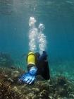 Agincourt-Reef;Agincourt-Reefs;air-tank;Australasian;Australia;Australian;Barrier-Reef;bubbles;coral-reef;coral-reefs;Coral-Sea;dive-site;dive-sites;diver;divers;diving;ecosystem;environment;flippers;Great-Barrier-Reef;Great-Barrier-Reef-Marine-Park;marine;marine-environment;marine-life;marinelife;North-Queensland;Ocean;oceanlife;Oceans;people;person;persons;Qld;Queensland;reef;reefs;ribbon-reef;ribbon-reefs;ribbonreef;ribbonreefs;scuba-diver;scuba-divers;scuba-diving;Sea;sealife;Seas;South-Pacific;Tasman-Sea;Tropcial-North-Queensland;tropical-reef;tropical-reefs;under-water;under_water;undersea;underwater;underwater-photo;underwater-photography;underwater-photos;UNESCO-World-Heritage-Site;watersport;watersports;Wiorld-Heritage-Site;World-Heritage-Area;World-Heritage-Park