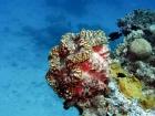 Agincourt-Reef;Agincourt-Reefs;Australasian;Australia;Australian;Barrier-Reef;bivalve-mollusc;clam;clams;coral-reef;coral-reefs;Coral-Sea;dive-site;dive-sites;diving;ecosystem;environment;Giant-Clam;Giant-Clams;Great-Barrier-Reef;Great-Barrier-Reef-Marine-Park;iridophores;mantle;marine;marine-environment;marine-life;marinelife;mollusc;molluscs;mollusk;mollusks;North-Queensland;Ocean;oceanlife;Oceans;Qld;Queensland;reef;reefs;ribbon-reef;ribbon-reefs;ribbonreef;ribbonreefs;scuba-diving;Sea;sealife;Seas;shell-fish;shellfish;South-Pacific;Tasman-Sea;Tropcial-North-Queensland;tropical-reef;tropical-reefs;under-water;under_water;undersea;underwater;underwater-photo;underwater-photography;underwater-photos;UNESCO-World-Heritage-Site;Wiorld-Heritage-Site;World-Heritage-Area;World-Heritage-Park