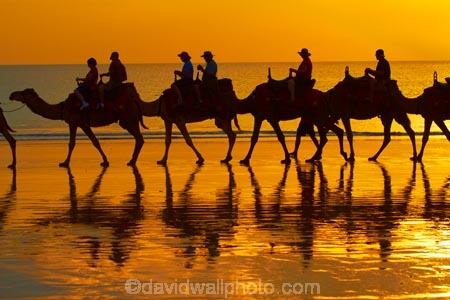 Australasian;Australia;Australian;beach;beaches;Broome;Cable-Beach;calm;camel;camel-train;camel-trains;camels;coast;coastal;coastline;dusk;evening;icon;iconic;icons;Kimberley;Kimberley-Region;nightfall;orange;placid;quiet;reflection;reflections;sand;sandy;serene;shore;shoreline;silhouette;silhouettes;sky;smooth;still;sunset;sunsets;The-Kimberley;tourism;tourist;tourist-attraction;tourist-attractions;tourists;tranquil;twilight;W.A.;WA;water;West-Australia;Western-Australia