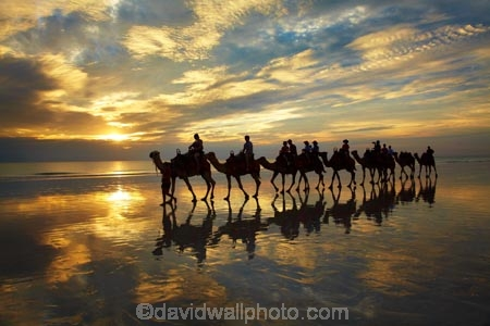 Australasian;Australia;Australian;beach;beaches;Broome;Cable-Beach;calm;camel;camel-train;camel-trains;camels;cloud;clouds;coast;coastal;coastline;dusk;evening;icon;iconic;icons;Kimberley;Kimberley-Region;last-light;late-light;nightfall;orange;placid;quiet;reflection;reflections;sand;sandy;serene;shore;shoreline;silhouette;silhouettes;sky;smooth;still;sunset;sunsets;The-Kimberley;tourism;tourist;tourist-attraction;tourist-attractions;tourists;tranquil;twilight;W.A.;WA;water;West-Australia;Western-Australia