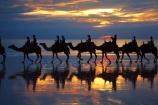 Australasian;Australia;Australian;Broome;Cable-Beach;camel;camel-train;camel-trains;camels;cloud;clouds;dusk;evening;icon;iconic;icons;Kimberley;Kimberley-Region;last-light;late-light;nightfall;orange;silhouette;silhouettes;sky;sunset;sunsets;The-Kimberley;tourism;tourist;tourist-attraction;tourist-attractions;tourists;twilight;W.A.;WA;West-Australia;Western-Australia