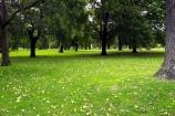 australasia;Australia;australian;deciduous;grass;grassy;Kings-Domain;lawn;lawns;Melbourne;park;parkland;parklands;parks;tree;Trees;Victoria