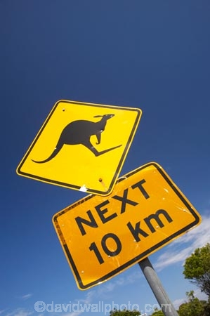 australasia;Australasian;Australia;australian;blue;Broadwater-N.P.;Broadwater-National-Park;Broadwater-NP;kangaroo;Kangaroo-Sign;Kangaroo-Signs;Kangaroo-Warning-Sign;kangaroos;N.S.W.;natural;nature;New-South-Wales;NSW;Road;road-sign;road-signs;road_sign;road_signs;roads;roadsign;roadsigns;sign;signs;symbol;symbols;tranportation;transport;travel;warn;yellow