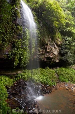 Australasian;Australia;Australian;cascade;cascades;Central-Eastern-Rainforest-Reserves;creek;creeks;Crystal-Falls;Crystal-Shower-falls;Dorrigo-N.P.;Dorrigo-National-Park;Dorrigo-NP;Dorrigo-Rainforest;falls;forest;forests;Gondwana-Rainforests-of-Australia;green;lush;Mid-North-Coast;Mid-North-Coast-NSW;Mid-North-Nsw;Mid-Northern-NSW;N.S.W.;natural;nature;New-South-Wales;NSW;overhang;rainforest;rainforests;scene;scenic;stream;streams;verdant;water;water-fall;water-falls;waterfall;Waterfall-Way;waterfalls;wet;Wonga-Walk;World-Heritage-Site