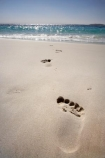 A.C.T.;ACT;Australasia;Australia;Australian-Capital-Territory;beach;beaches;Booderee-N.P.;Booderee-National-Park;Booderee-NP;coast;coastal;coastline;foot-print;foot-prints;footmark;footprint;footprints;Jervis-Bay;Jervis-Bay-Territory;Murrays-Beach;Murrays-Beach;N.S.W.;New-South-Wales;NSW;ocean;oceans;sand;sandy;sea;seas;shore;shoreline;South-New-South-Wales;Southern-New-South-Wales;toe-print;toe-prints