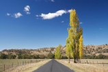 australasia;Australasian;Australia;australian;autuminal;autumn;autumn-colour;autumn-colours;autumnal;Brungle;color;colors;colour;colours;deciduous;driving;fall;Gundagai-_-Tumut-Rd;Gundagai-_-Tumut-Road;Gundagai-Brungle-Rd;Gundagai-Brungle-Road;leaf;leaves;N.S.W.;New-South-Wales;NSW;open-road;open-roads;poplar;poplar-tree;poplar-trees;poplars;road;road-trip;roads;season;seasonal;seasons;South-New-South-Wales;South-West-Slopes;Southern-New-South-Wales;straight;Tarrabandra;transport;transportation;travel;traveling;travelling;tree;trees;trip