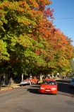 australasia;Australasian;Australia;australian;autuminal;autumn;autumn-colour;autumn-colours;autumnal;Batlow;color;colors;colour;colours;deciduous;fall;leaf;leaves;N.S.W.;New-South-Wales;NSW;oak;oak-tree;oak-trees;oaks;red-car;red-cars;season;seasonal;seasons;Snowy-Mountains;Snowy-Mountains-Drive;South-New-South-Wales;South-West-Slopes;Southern-New-South-Wales;tree;trees