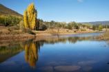 australasia;Australasian;Australia;australian;autuminal;autumn;autumn-colour;autumn-colours;autumnal;calm;color;colors;colour;colours;dam;dams;deciduous;fall;Jounama-Dam;Jounama-Pondage;Jounama-Reservoir;lake;lakes;leaf;leaves;N.S.W.;New-South-Wales;NSW;placid;poplar;poplar-tree;poplar-trees;poplars;quiet;reflection;reflections;reservoir;reservoirs;season;seasonal;seasons;serene;smooth;Snowy-Mountains;Snowy-Mountains-Drive;Snowy-Mountains-Highway;Snowy-Mountains-Hydro_Electric-Scheme;Snowy-Mountains-Scheme;South-New-South-Wales;Southern-New-South-Wales;still;Talbingo;tranquil;tree;trees;water